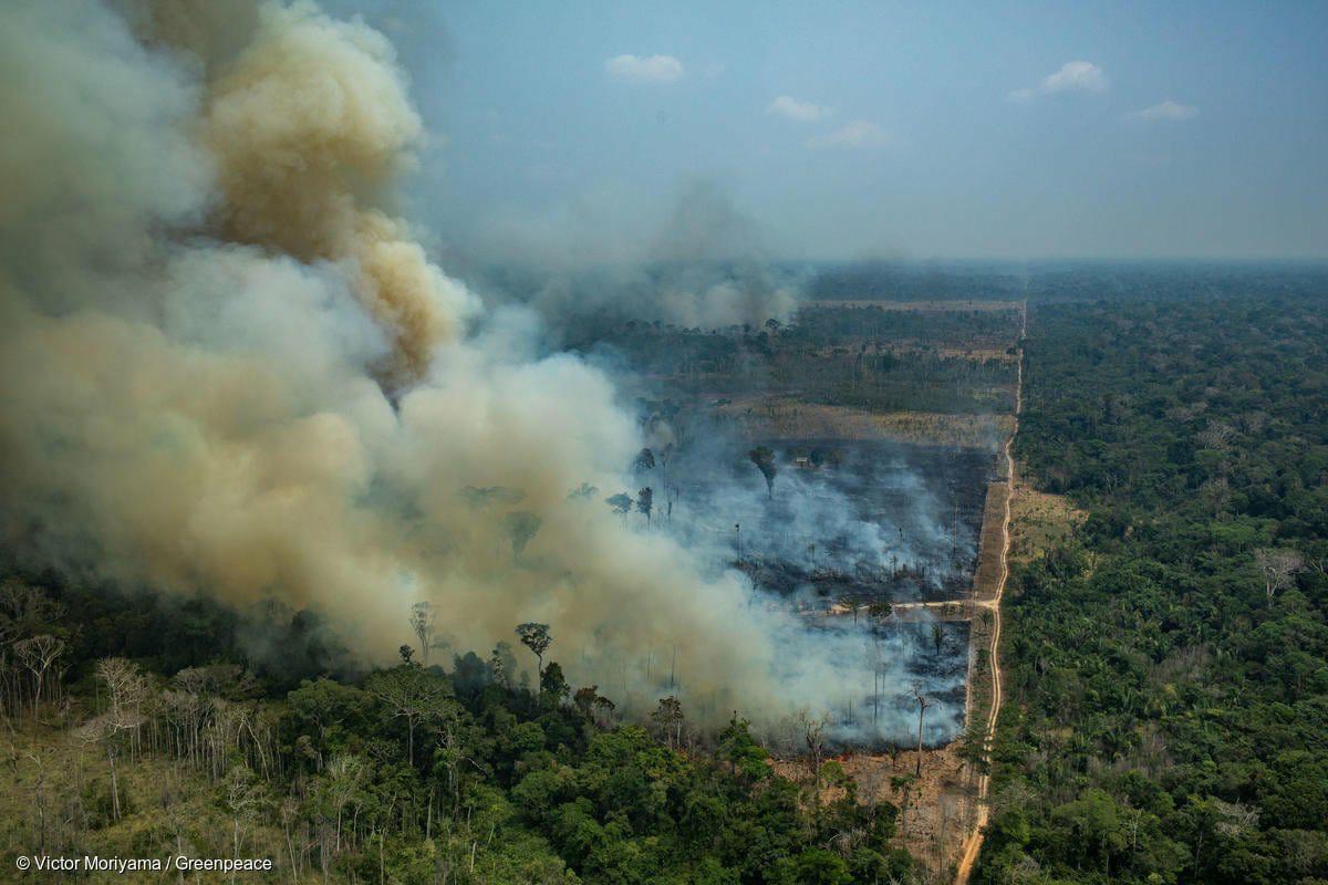 incendio en las amazonas