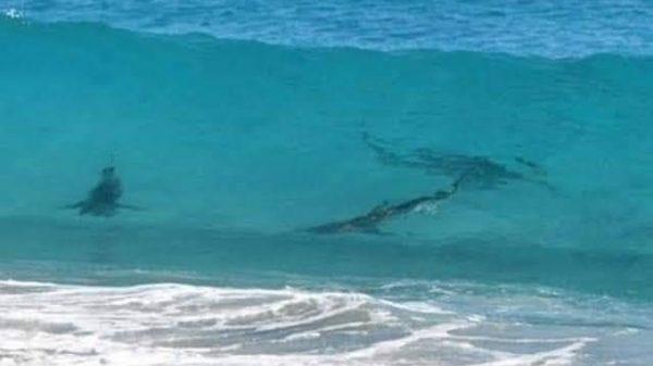 playa-tiburones-quintana-roo-1