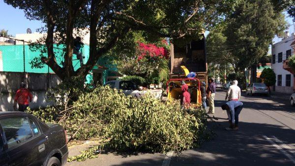 poda de árboles para Azcapotzalco