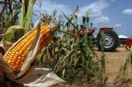 """Denuncian irregularidades en programa """"más maíz mexiquense"""""""