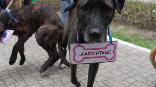 Aumenta abandono de mascotas en CDMX