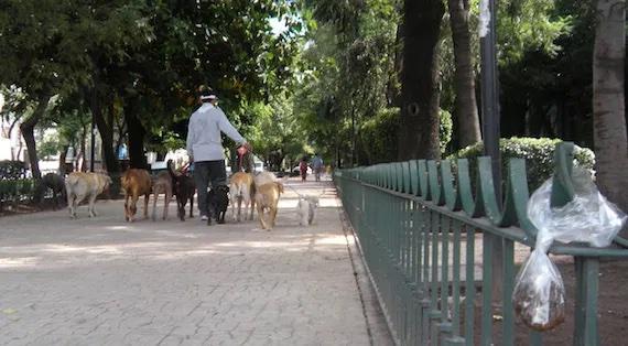 Exigen contenedores de heces animales en Álvaro Obregón