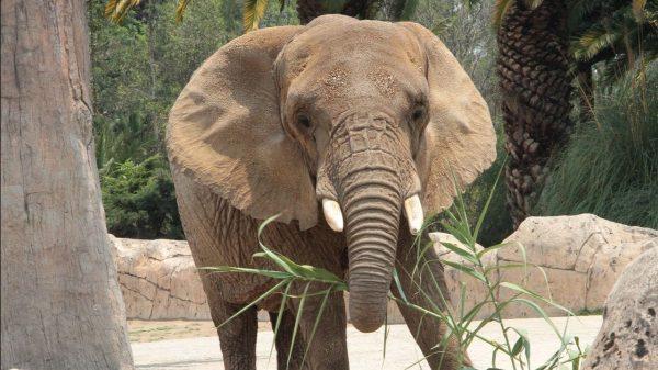 Ely la elefanta