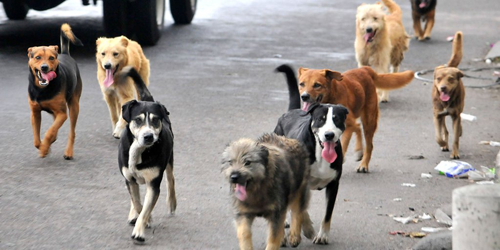 Buscan dar protección a animales