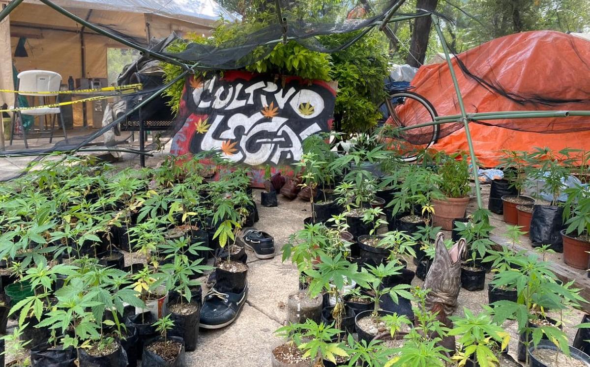 Retiran campamento pro marihuana ubicado frente al a Senado