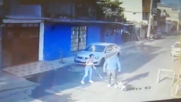 Perro salva a su dueña durante un violento ataque