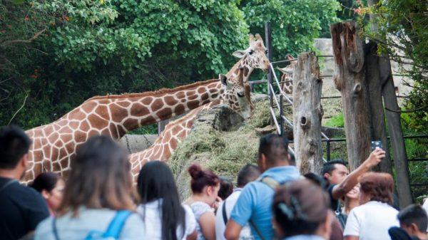 Piden a Sedema informar sobre estado de zoológicos en CDMX