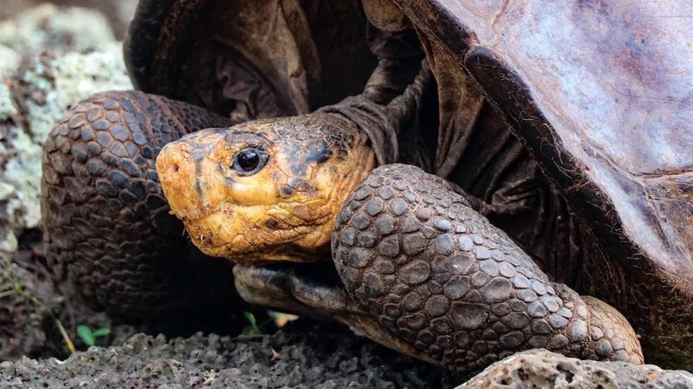 Encuentran a tortuga que se creía extinta