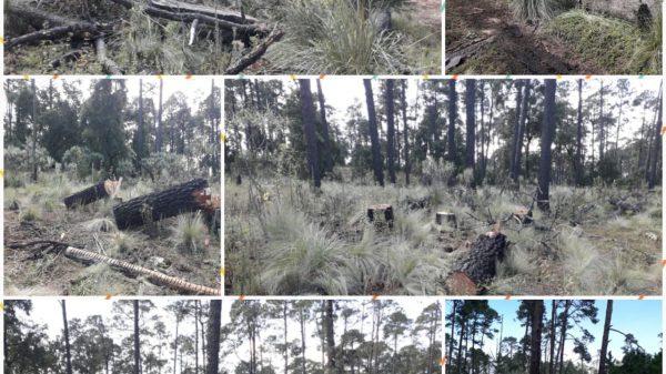 Octavio Rivero solapaba cacería y tala clandestina en Milpa Alta