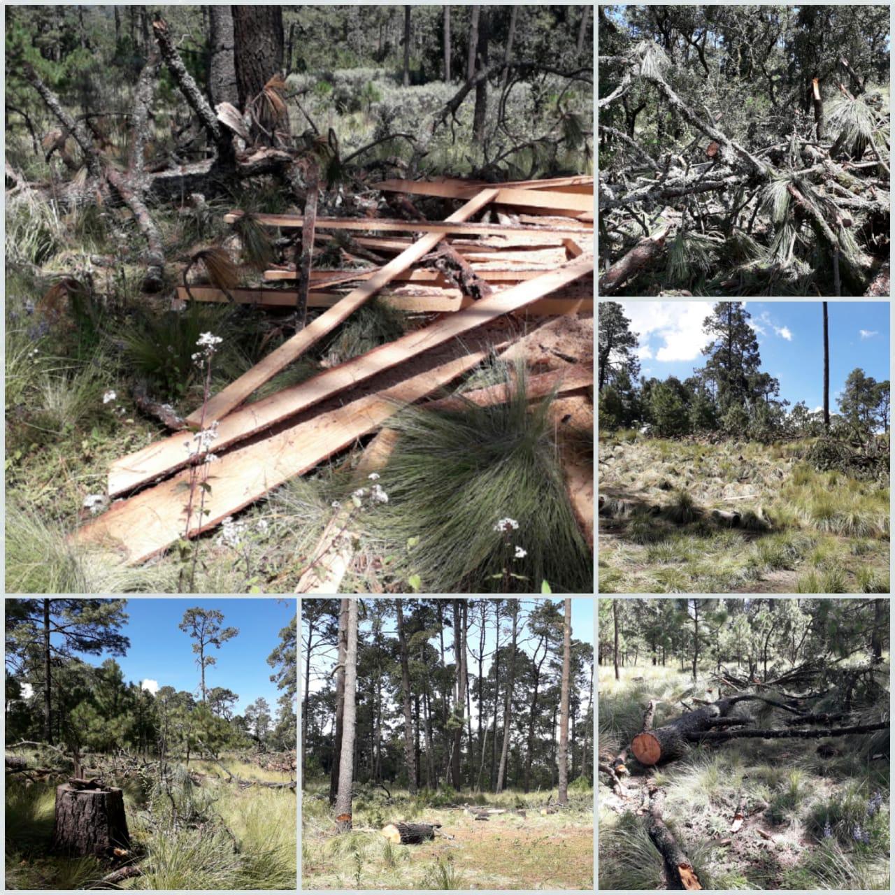 Denuncian comuneros daño ecológico y cacería clandestina en Milpa Alta