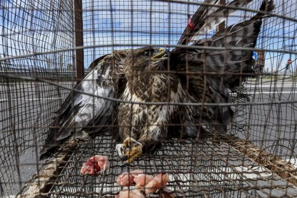 Descarada venta ilegal de Aguilas en Magdalena Contreras