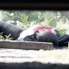 Matan a mujer y tiran su cadáver en autopista Chamapa-Lecheria