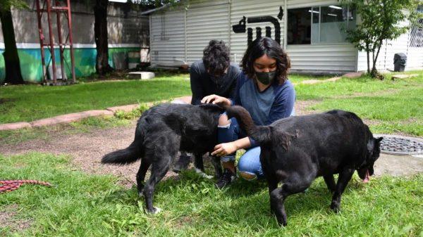 El metro da en adopción a perritos rescatados