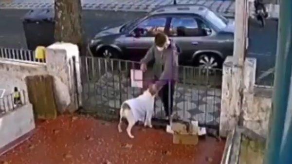 Le roban suéter a perrito